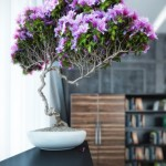 4-Azaleea sau Rhododendronul plantat in ghivechi planta otravitoare apartament