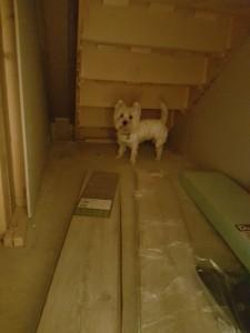 4-Molly si spatiul de sub scara interioara inainte de amenajare