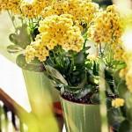 4-ghivece mici cu flori decor living amenajat in aer liber pe terasa casei