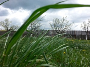 4 iarba din gradina trebuie cosita