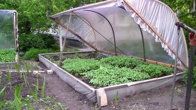 model simplu rasadnita legume gradina