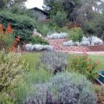 4-o gradina cu plante si flori din flora locala