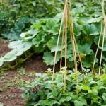 4-suport din bambus pentru legume cataratoare