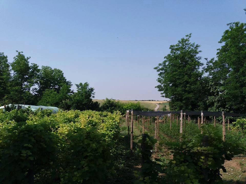 vie gradina solar casa 10000 euro sat Mihai Viteazu