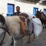 40-magarusi incarcati cu greutati pe strazile insulei Hydra Grecia