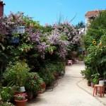 41-bogatie de flori pe o straduta din FIskardo Kefalonia Grecia