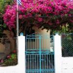 43-bolta de bougainvillea ciclam la intrarea in curtea unei casute din FIskardo