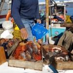 43-peste proaspat de vanzare in portul insulei Hydra Grecia