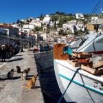 46-pisici cersind peste proaspat de la pescari in portul Hydra Grecia