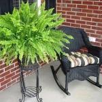 5-Feriga planta de apartament decorativa prin frunze