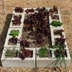 5-cultivare legume in straturi inaltate gradina din boltari de zidarie din beton