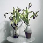 5-doua vaze cu flori ofilite care arata foarte urat