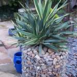 5-gabion din plasa si pietre de rau in forma de ghiveci pentru yucca