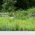 5-garduri rustice si flori de camp curte ferma cu nuci marea britanie