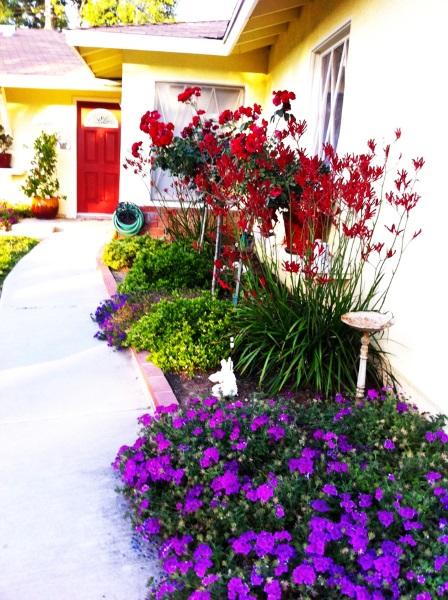 5-idee amenajare curte cu multe flori colorate