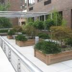 5-oaza de verdeata cu plante si arbusti ornamentali plantati pe acoperisul unui bloc