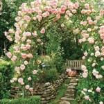 5-pergola de gradina imbracata in trandafiri cataratori roz