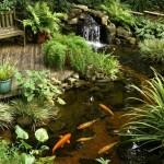5-plante acvatice amenajare iaz ornamental asiatic in gradina