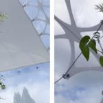 5-rasaduri de rosii si flori in interiorul domurilor transparente din policarbonat SHJWorks