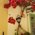 6-casa galbena cu tamplarie vernil decorata cu bougainvillea