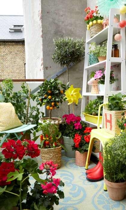 6-flori-plante-verzi-decor-balcon