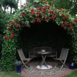 6-foisor de gradina imbracat in trandafiri cataratori si iedera