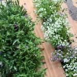 6-plantarea florilor si plantelor intre stinghiile paletului din lemn