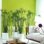 6-plante verzi decor living amenajat in stil modern