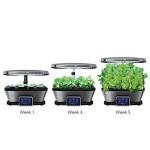 6-viteza crestere plante cultivate in AeroGarden