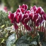 Iata care sunt plantele benefice pentru fiecare camera din casa ta