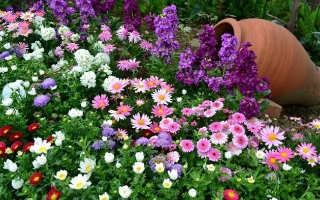 7-combinatii diverse de flori pentru ronduri decorative de gradina
