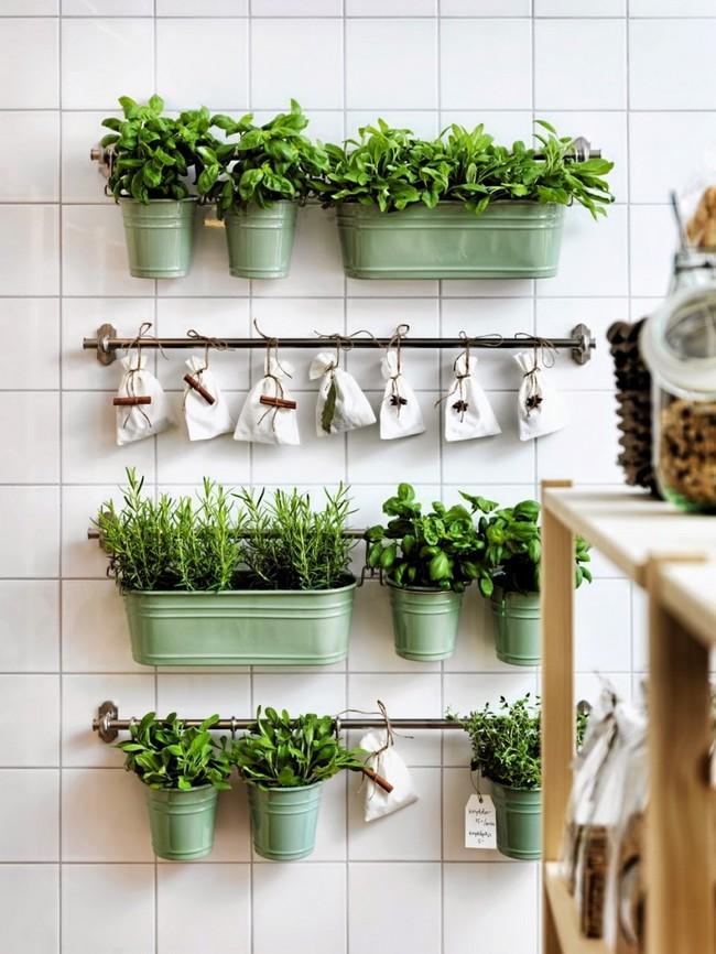 pastrare organizata plante aromatice perete bucatarie