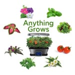 7-plante ce pot fi cultivate in AeroGarden