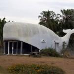 constructie in forma de balena queensland australia