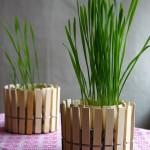 8-ghivece rustice pentru plante de apartament din cutii de conserve si clesti de rufe