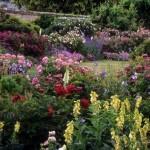 8-gradina cu multe specii de flori frumoase