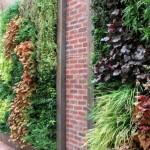 8-gradini verticale frumoase si decorative pe zidul casei