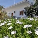 8-margarete africane in fata unei case de pe insula Spetses