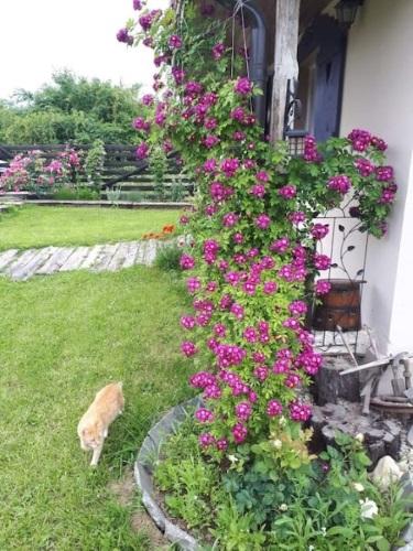 flori decoratiuni rustice exterior casuta vacanta Pitesti Arges