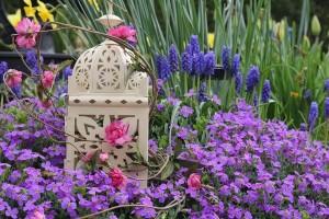 aranjament de gradina cu flori violet si roz