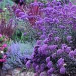 aranjamente terasate de gradina cu flori mov si violet