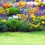3 scheme de plantare a florilor pentru o gradina de poveste