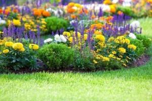 aranjarea si gruparea florilor in gradina casei