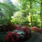 arbusti ornamentali colorati decor salbatic gradina traditionala