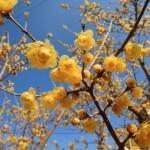 Arbustul zanei – o planta potrivita pentru gradini