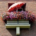 Cum alegem plantele si florile pentru balconul de apartament