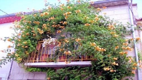 balcon plin cu plante