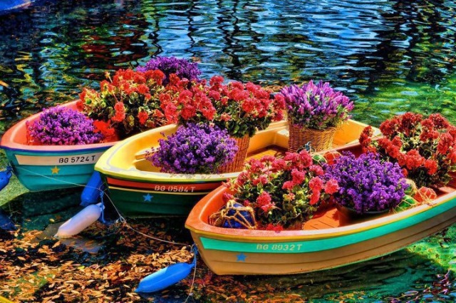 barci pe lac