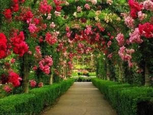 bolta de gradina cu trandafiri multicolori