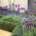 bordura terasata de gradina cu flori violet